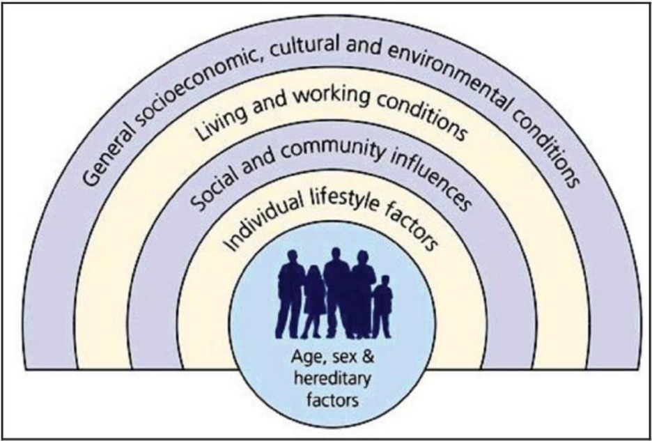the four determinants of health health and social care essay Determinants of health in new zealand:  about social, cultural and economic determinants and  the two background papers are available from the national health .